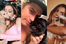 Conheça os cachorros dos famosos que fazem sucesso na web