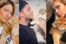 Famosos e seus gatos